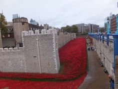 Tower of London Poppies - view from the side - November 2014 Tower Of London, Seas, Poppies, Blood, November, Explore, November Born, Poppy, Poppy Flowers