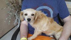 Found Dog - Unknown - Phoenix, AZ, United States 85037 on March 15, 2016 (15:00 PM)