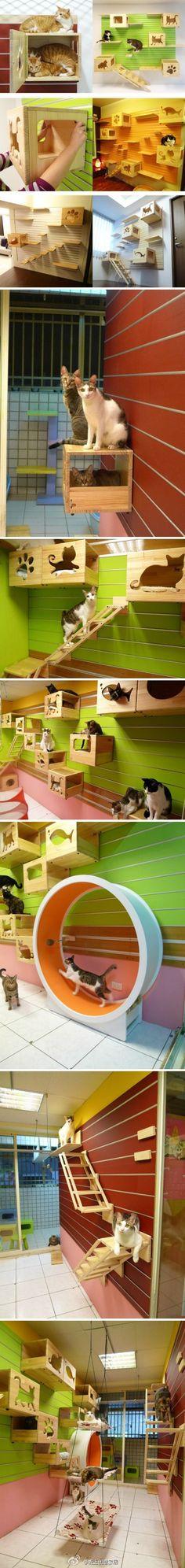 cat's                                                                                                                                                                                 More