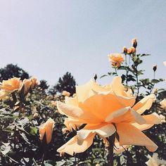 → les fleurs ✿