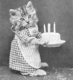 Gato con tarta de cumpleaños para @araceliplata