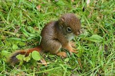 Squirrels of Oshawa, (for those who love them)