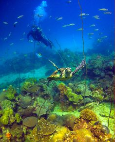 Nosy Komba - Scène de vie sous-marine Nosy Be Madagascar, Madagascar Travel, Places To Travel, Places To Go, Pays Francophone, Life Under The Sea, Volunteer Abroad, Wildlife Nature, Water Photography