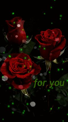 Free Red Roses Animated Mobile Wallpaper By On Tehkseven