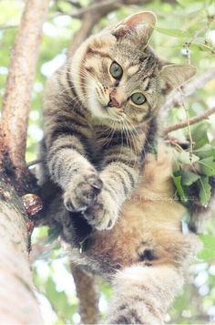 Tabby cat in tree