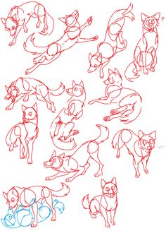 Canine Poses by Spakitty.deviantart.com on @DeviantArt