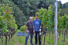Harvest time in Val di Cembra, Trentino, Italy with Alfio Nicolodi