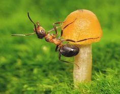"""""""Histórias com formigas"""" Estas são algumas das fotos que faz com que o fotógrafo russo Andrey Pavlov."""