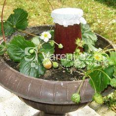 Jahodová marmeláda s vůní vanilky recept - Vareni.cz Plants, Plant, Planets
