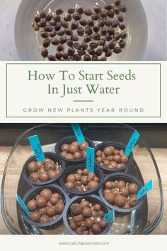 Starting seeds is a great way to grow new plants at anytimeof the year. Starting plants from seeds is also more cost efficient than buyingseedlings each season for your garden. So which method is best for germinatingseeds? After all you can start plants in so many ways that it can almost beoverwhelming. Let's start seeds the cheapest and simplest way possible – inwater. See the Pros and Cons of starting seeds directly in water and in agrowing medium such as hydroton. Starting Plants From Seeds, Seed Starting, Growing Vegetables, Growing Plants, Hydroponic Gardening, Gardening Tips, Seed Germination, Bountiful Harvest, Hydroponics System