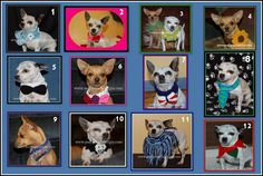 E Book of 12 Dog Collar Crochet Patterns   by poshpoochdesigns