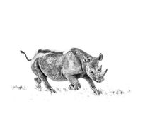 BW print of a desert black rhino charging by wildlife photographer Dave Hamman African Animals, Wildlife Art, Animal Prints, Fine Art Paper, Fine Art Prints, Moose Art, Abstract Art, Canvas Art, Black And White