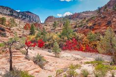 Zion Fall Delight by John M Bailey  #Utah #Travel #photography #NationalParks #PhotoArt