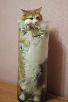 LMAO!!! 22 cats in strange places