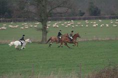 Ledbury in England ... drag hunting...