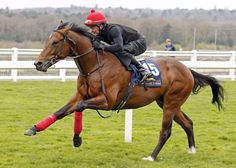 The Tattersalls Ireland Ascot Breeze-up Sale may be the new kid on the block of European 2-year-old auctions but it has swiftly become embedded as the seasonal opener and a strong turnout on Wednesday set …