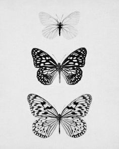 #monochrome #monotone #black #white #butterfly