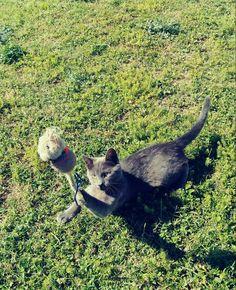 Cat Bobcat, Garden Sculpture, Bird, Cats, Outdoor Decor, Animals, Gatos, Animales, Animaux