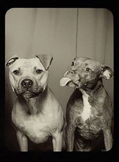 Dogs in a Photo Booth? Perfect. Photo by Lynn Terry.