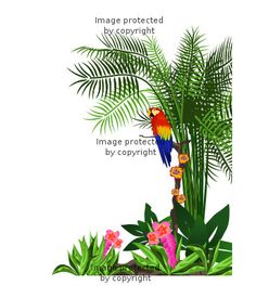 1000 images about jonah s rainforest on pinterest