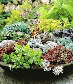 BALDUR-Garten Winterharte Sedum-Mischung Fetthennen Hauswurz Stauden Sortiment, 6 Pflanzen