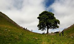 A dip in the landscape with a large sycamore growing from it and Graham Robb and Boyd Tonkin nearby