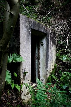 Doorway in the woods, abandoned