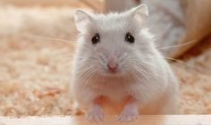 Hamster cute !!!!!!