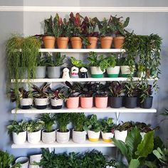 has just landed! Can you spot anything on our Saturday that makes your heart skip a beat? We're open from 9 - see you soon! Indoor Garden, Indoor Plants, Shelfie, Your Heart, Houseplants, Beats, Planter Pots, Urban, Make It Yourself
