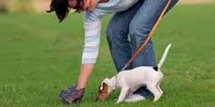 Crown Products is the industry leader in dog poop waste bags and baby poop disposal bags. We are known for our bags and commercial grade waste dispensers.