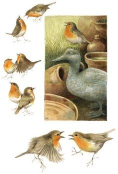 Robin Redbreast - brown, red, orange