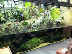 Green Chapter - Stunning Aquarium Simply For You Aquarium Design, Reef Aquarium, Aquarium Fish Tank, Fish Tanks, Aquarium Terrarium, Reptile Terrarium, Nature Aquarium, Aquariums, Turtle Habitat