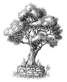 Tree Vector Images (over Black And White Tree, Black And White Drawing, Vector Trees, Vector Art, Vector Stock, Bonsai, Tree Sketches, Drawing Sketches, Olive Tree Tattoos