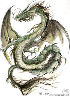 Green Dragon by *drakhenliche on dA