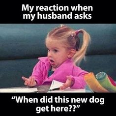 What new dog
