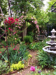 Herb garden roses