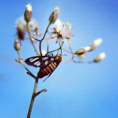 Insect Climber #macro #cikoneng #bandung #indonesia