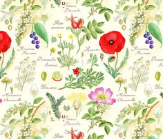 botanical-sketch fabric by gaiamarfurt on Spoonflower. This would be so pretty as jar covers