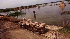 জামালপুরের মেলান্দহে সোনালী আঁশ ঘরে তুলতে ব্যস্ত কৃষকরা- ইত্তেফাক