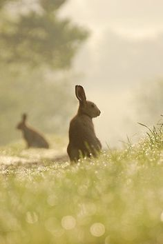 .Bunny in the fields