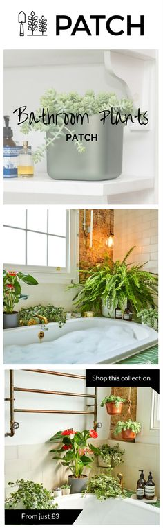 Bathrooms are great spaces for plants as they are often the most humid rooms in a home, making watering a less frequent requirement. Whether inside or outside your home or office, Patch helps you choose the best plants for you, delivers them to your door Bathroom Inspiration, House Styles, Decor, Home, Bathroom Plants, Interior And Exterior, Home And Garden, Cool Plants, Green Inspiration