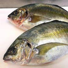 Beautiful Shima Aji for tonites Crudo. #ebbittroom #freshfish #japanese #fishlife #shimaaji #yum