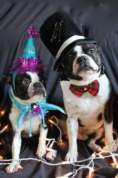 Boston Terriers New Years