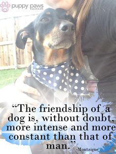 The #Friendship of a #Dog is, without doubt, more intense and more constant than that of a man_Montaigne #DogLovers #DogCare