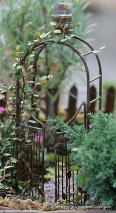 25 Perfect Accessories for Miniature Gardens/ Pinning this for the type of plant used to grow on the arbor.