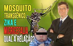 MosquitoTransgênico - Zika e Microcefalia - Qual a Relação?