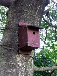 Birdhouse tied to the tree.
