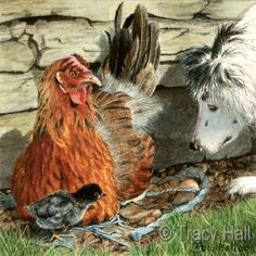 hen and collie miniature watercolour painting by tracy hall