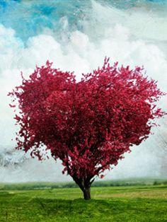 albero dell'amore