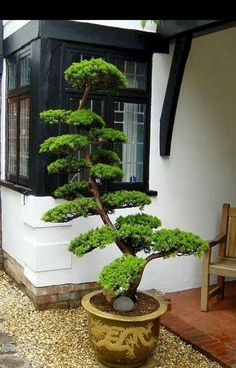 80 Wonderful Side Yard And Backyard Japanese Garden Design Ideas. If you are looking for 80 Wonderful Side Yard And Backyard Japanese Garden Design Ideas, You come to the right […]. Japanese Garden Plants, Japanese Garden Landscape, Japan Garden, Japanese Gardens, Japanese Tree, Asian Plants, Zen Garden Design, Japanese Garden Design, Design Tropical